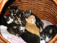 Katzenkitten