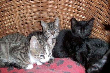 Spendenaufruf – Hilfe für Katzenbabys