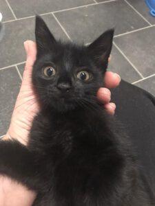schwarze Katze 2